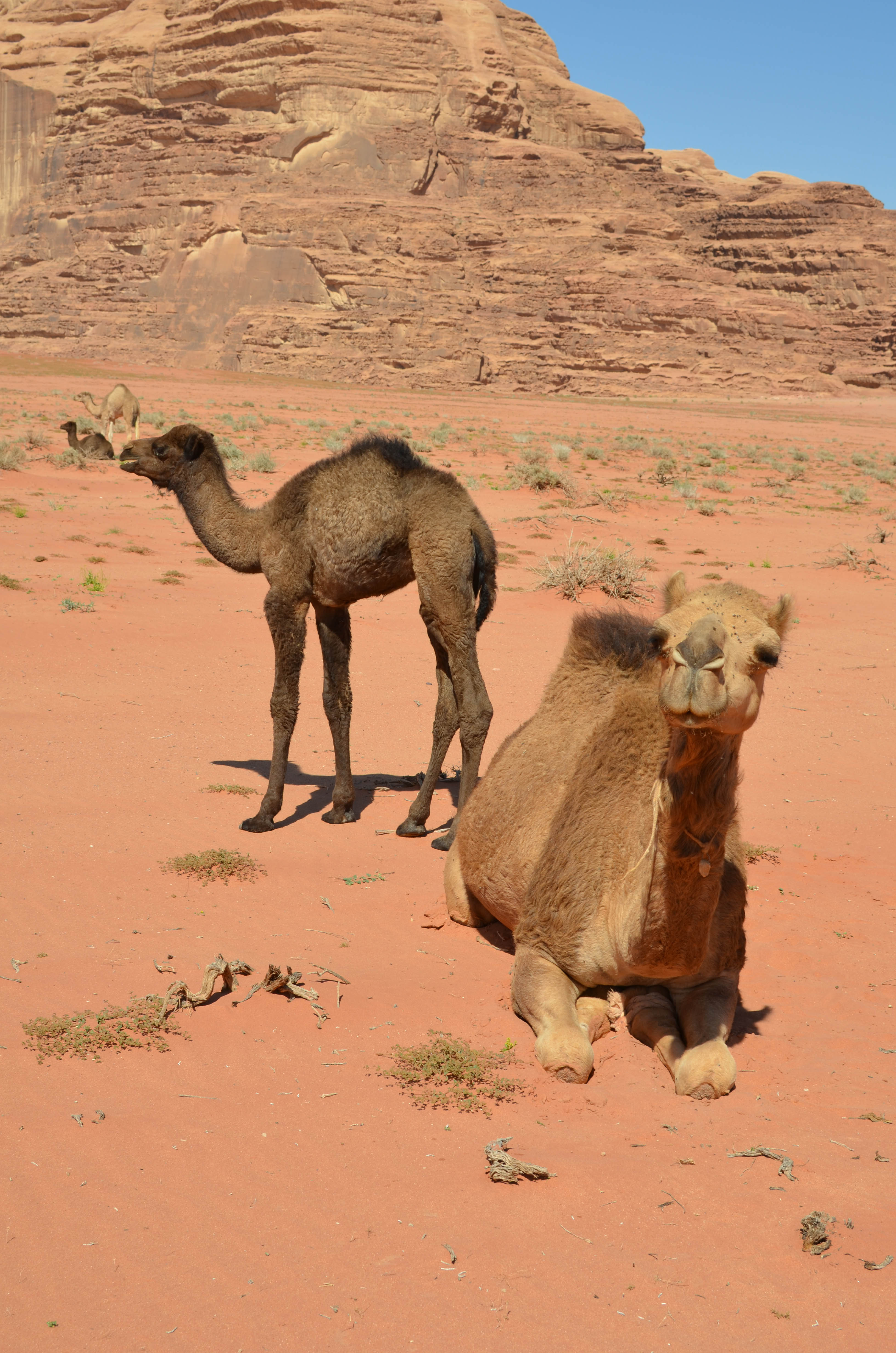 Mom and baby in Wadi Rum