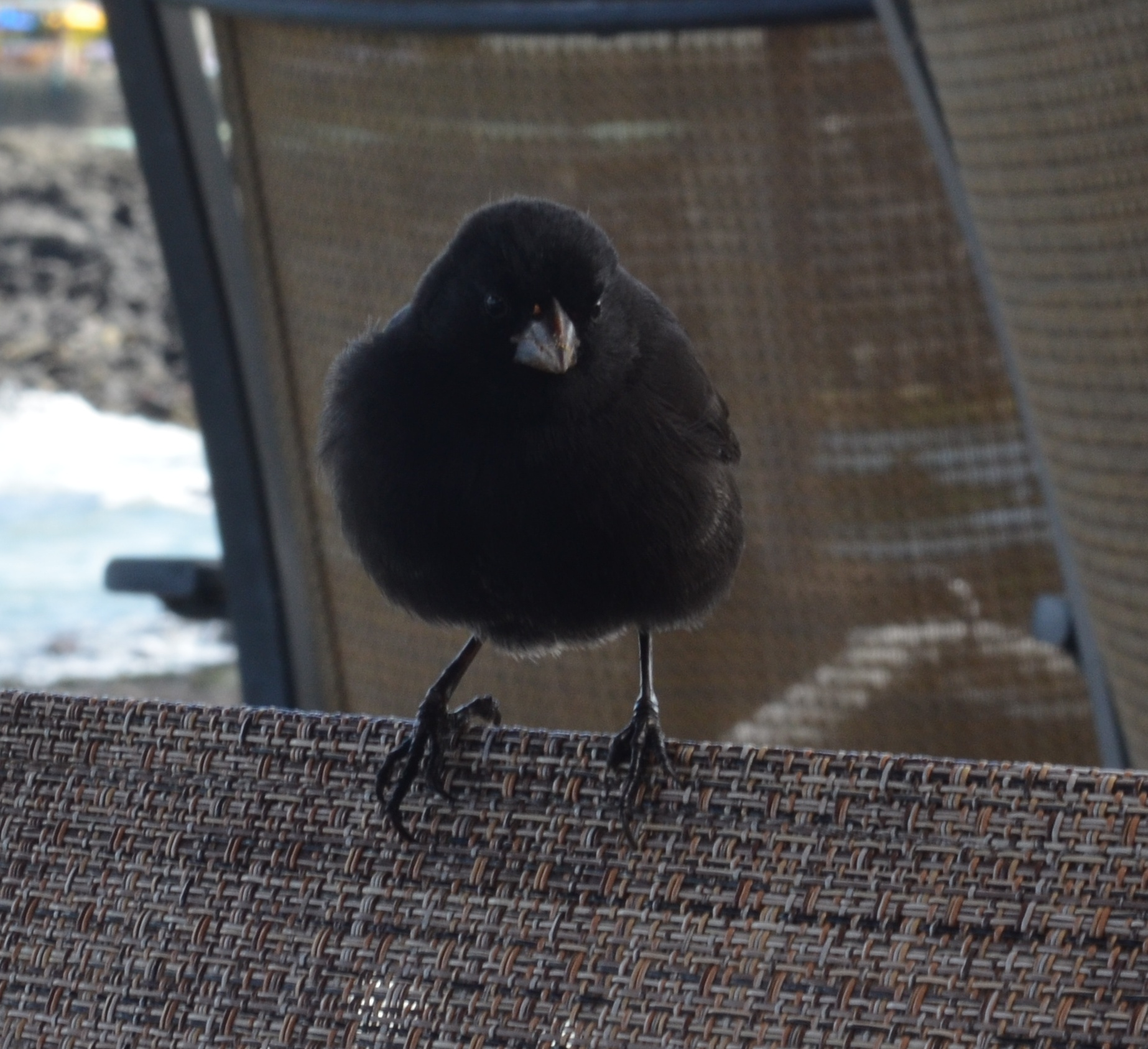 A bird sitting right next to us during lunch